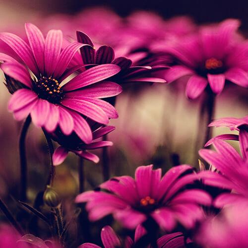 category Цветы